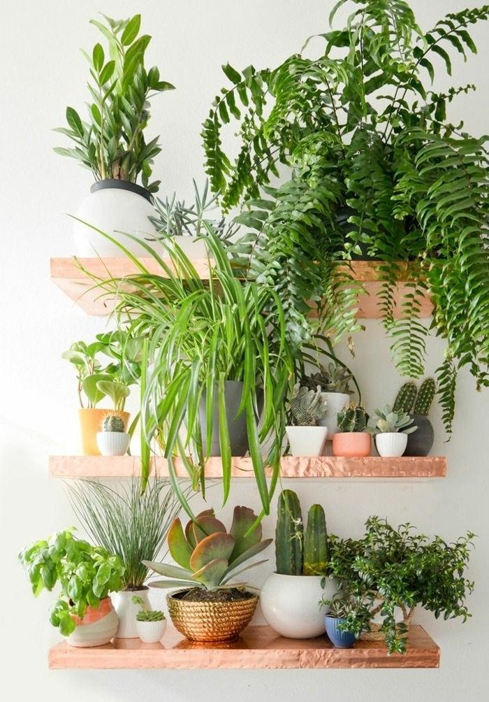 Домашняя оранжерея: выбираем красивые и полезные комнатные растения (очищающие, бактерицидные, увлажняющие) - фото №3