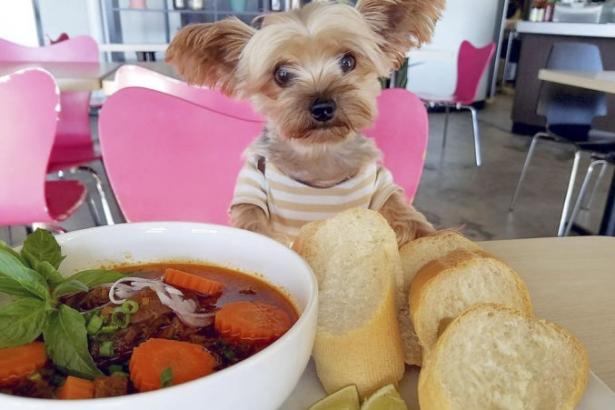 Новый год 2018 суп