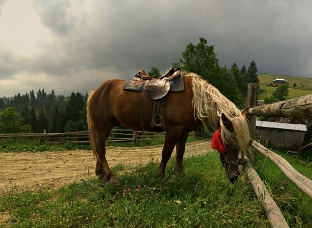 Отдых в Карпатах летом