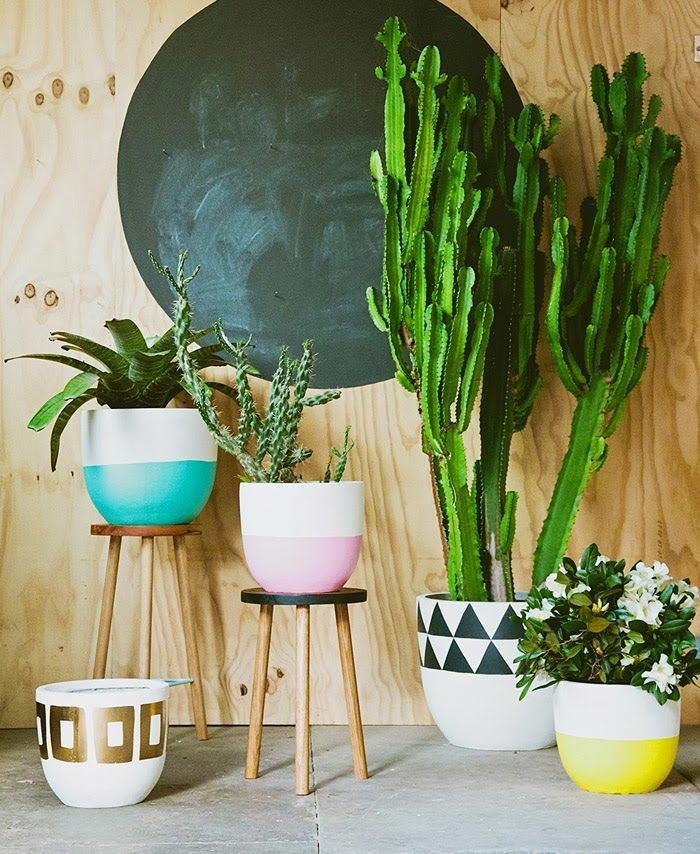 Домашняя оранжерея: выбираем красивые и полезные комнатные растения (очищающие, бактерицидные, увлажняющие) - фото №9