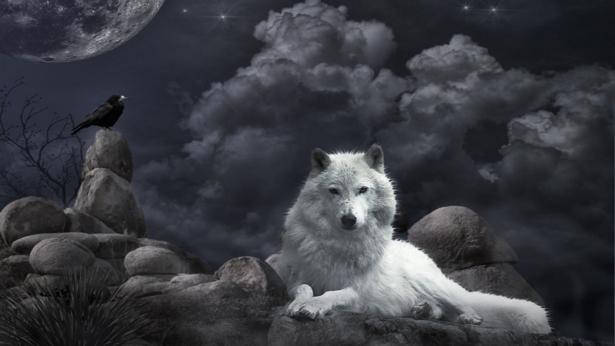 Игра Белый волк
