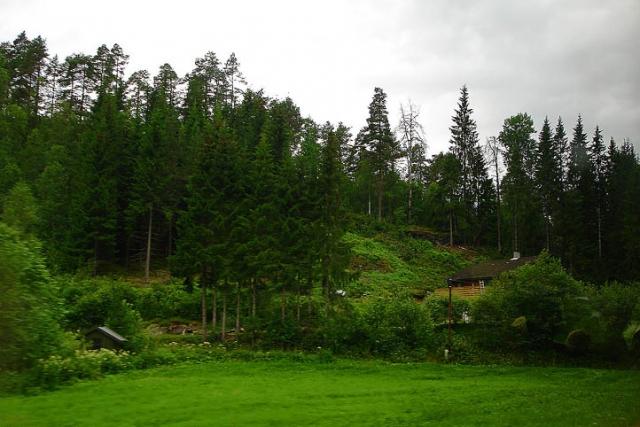 Впервые в мире: в Норвегии официально отказались от вырубки лесов - фото №1