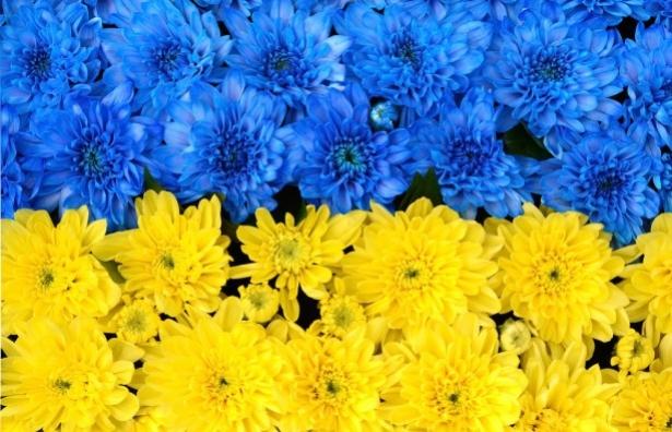 цветочный флаг украины 2016