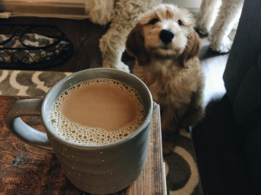 кофе завтрак собака