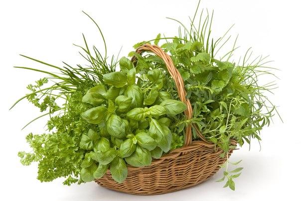 Зеленые смузи для очищения организма - фото №3