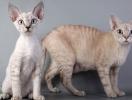 Домашние животные, которые не вызывают аллергии
