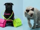 Собаки заменили моделей в рекламе аксессуаров