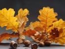 Осенние поделки для детей: варианты досуга