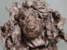 Забавные животные: Софи Гаманд сделала фотосессию мокрых собак