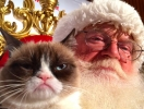 Знаменитые коты Интернета снялись в рождественском клипе