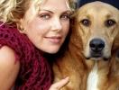 Почему звезды выгуливают не породистых собак