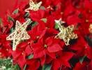 Какие цветы можно подарить на Новый год