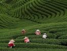 Отдых в Китае – настоящая экзотика! (когда лучше лететь, курорты, виза,  сувениры)