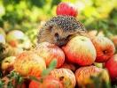 Приметы на Яблочный Спас и все о празднике: что святить, можно ли работать и что нельзя нельзя делать на Преображение Господне