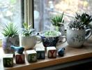 Украшаем квартиру домашними растениями: 8 классных идей
