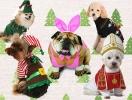 Как люди одевают своих питомцев на Новый год: четвероногий маскарад