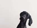 Как правильно выбрать собаку и действительно ли она нужна тебе?