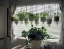 Свойства комнатных растений: выбираем собственного «помощника» вместе с экстрасенсом Максимом Гордеевым
