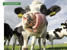 Вегетарианство для чистого воздуха: как скотоводство влияет на окружающую среду