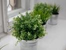 Go green: как устроить огородик с зеленью на подоконнике и зачем это делать летом