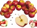 Все, что мы должны знать про яблоки и яблочные косточки: почему можно есть косточки от яблок