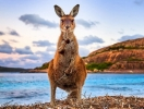 Не мейнстрим: куда идти и на что смотреть в Австралии