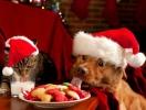 Новый год 2018: что приготовить на праздничный стол в год Желтой Земляной Собаки