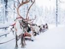 Без 10 дней Новый год: 9 мест, где встретить Желтую Земляную Собаку 2018