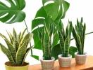 Модные комнатные растения для гостиной: пять вариантов