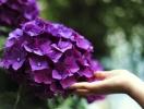 День Ильи 2019: оригинальные поздравления в стихах и в прозе в Ильин день