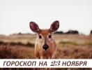 Гороскоп на 23 ноября: с судьбой не ведут предварительных переговоров
