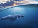 Смерть от мусора: в Италии в теле беременной самки кита нашли 22 кг пластика