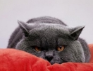 Выбирай: кот или я!