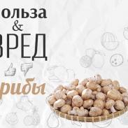 Польза и вред грибов: чем опасен белок хитин в их составе