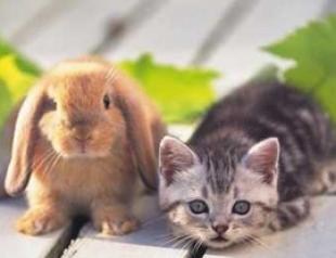 Гороскоп по знакам Зодиака на 2011 год. То ли Кролик, то ли Кот…