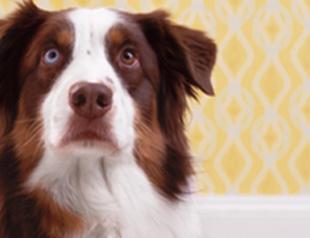 Какие продукты нельзя давать домашним животным