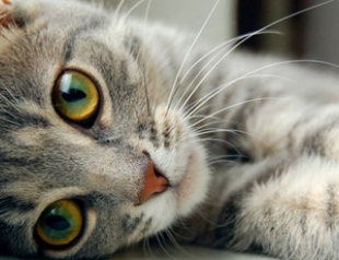 О чем говорят повадки котов