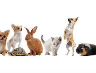 Первое животное в доме: как подготовиться?