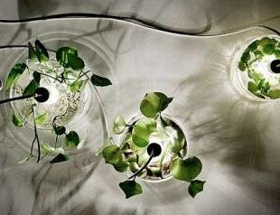 Идея ночника с использованием живой зелени