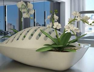 Идея: растения помогут с мытьем посуды