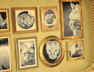 Мастер-класс: дом для кошки своими руками