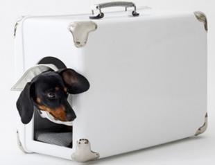 Куда деть собаку на время отпуска?