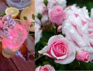 Старо-шотландский коктейль из роз