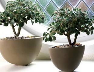 Как выбрать комнатные растения по знаку Зодиака?