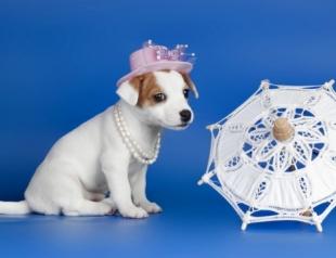 Топ 10 самых гламурных пород собак