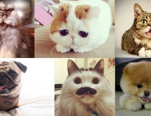 Самые забавные животные из Instagram