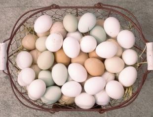 Пасха: как проверить качество яиц