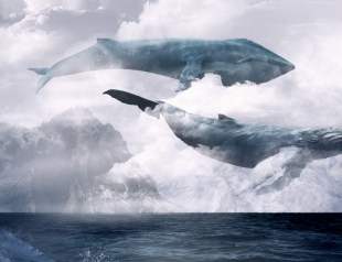 Киты плывут вверх: детские суициды и стихийное бедствие в Новой Зеландии
