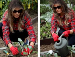 Мелания Трамп разбила огород возле Белого дома: собрала урожай перца и посадила капусту (ВИДЕО)