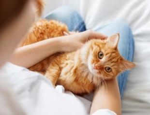 """Стало известно, зачем на самом деле коты """"мнут"""" лапками человека"""